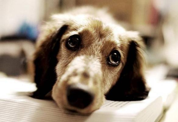 αδέσποτο-αδέσποτα-σκυλίτσα-σκύλος