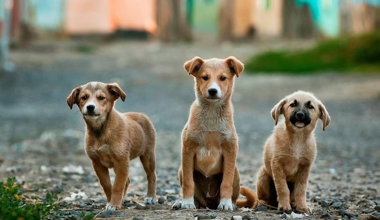 Διακίνηση αδέσποτων σκυλιών από την Κρήτη στην Γερμανία