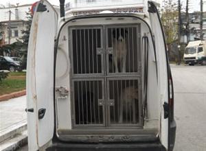 Δεύτερο κρούσμα λαθραίας εξαγωγής αδέσποτων ζώων αυτή τη φορά από την Σητεία